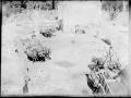 Carros de mula transportando escombros del edificio viejo 1924
